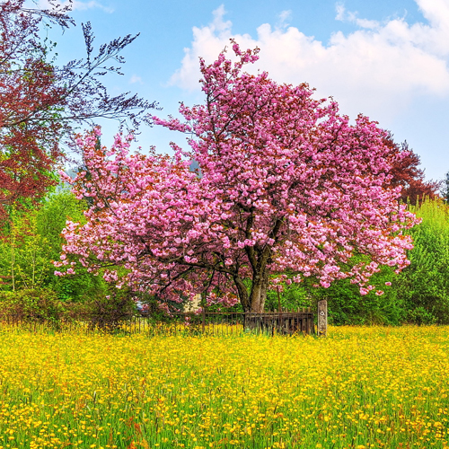 Foto campagna alberi in fiore e prato